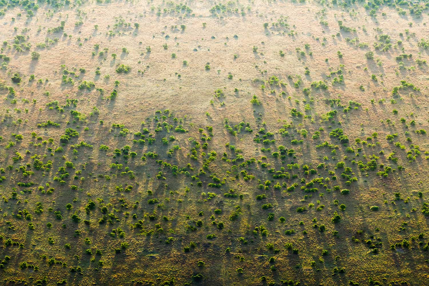 read Something Positive: The Great Green Wall of Africa